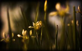 природа, квіти, фото, обої «