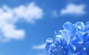 квітка, небо, хмари, обої, природа, краса «