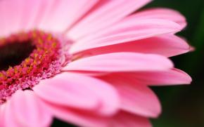 квіти, природа, макро фотографії, пелюстки «