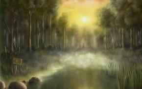 sunset, radiation, and swamp